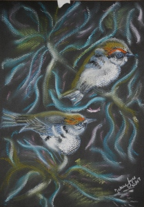 Gold Crown Finches