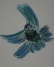 Humming Bird 08-3