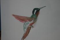 Humming Bird 08-5