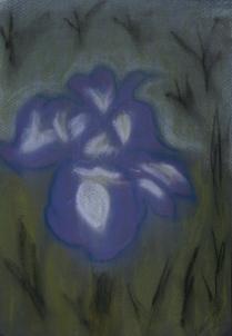 Iris by Night